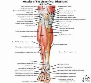 Digital Anatomy Location