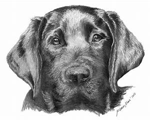 Black Labrador - Miriam Mas Art - Drawings & Illustration ...