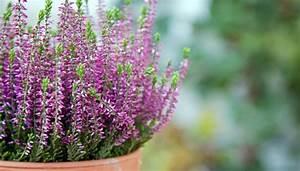 Welche Blumen Blühen Im Oktober : herbstbl her auf terrasse und balkon pflanzen ~ Bigdaddyawards.com Haus und Dekorationen