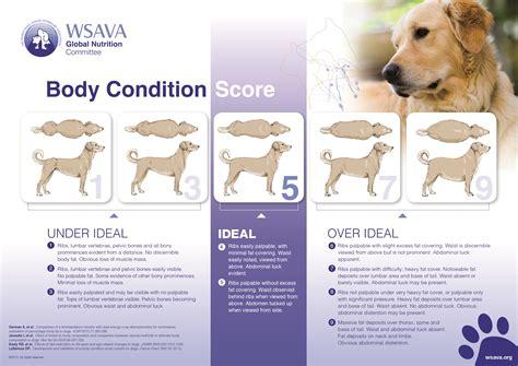 healthy dog weight  dog obesity karingal vet hospital
