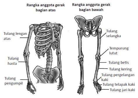 Janin Yang Kuat Ilmu 212 Jenis Jenis Tulang Manusia
