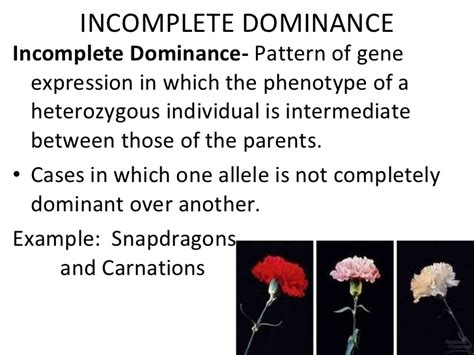 Incomplete Dominance In Humans