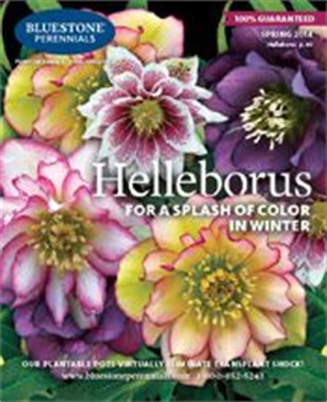 best mail order perennials best 25 plant catalogs ideas on pinterest desert plants ice plant and coleus care