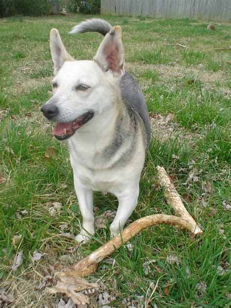 Nashville Pet Owners Test Your  Ee  Dogs Ee   Dna Mom Blog