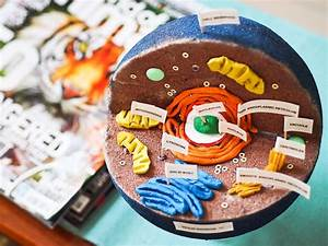 3d Animal Cell Project Ideas