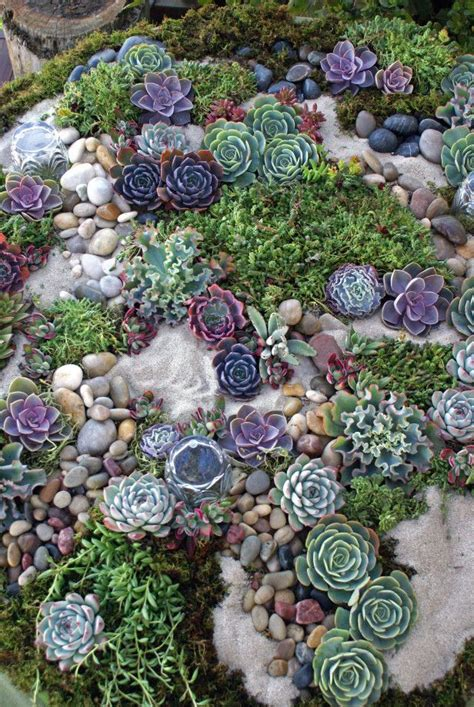 succulent flower bed 1214 best images about endless succulent ideas on pinterest succulent containers agaves and