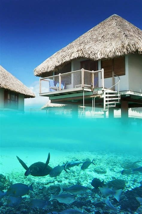 Over Water Bungalows Underwater View Luxury Beach Villas