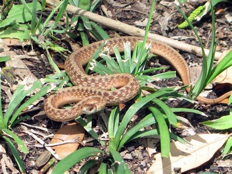 how to get rid of garden snakes ridding your garden of snakes tips on how to get rid of