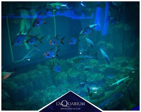 l aquarium picture of l aquarium tripadvisor