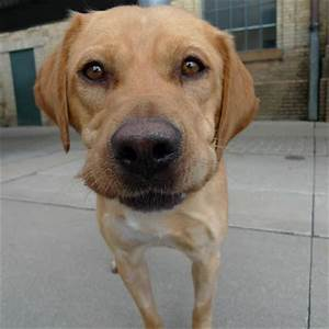 One Bark at a Time: Toronto Animal Services Friday review ...