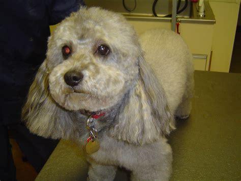 dog grooming stubbys dog wash
