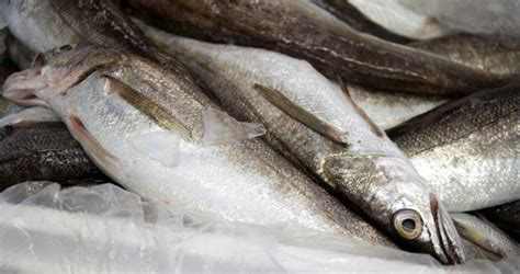 whiting fish whiting fish available from zeus packing inc