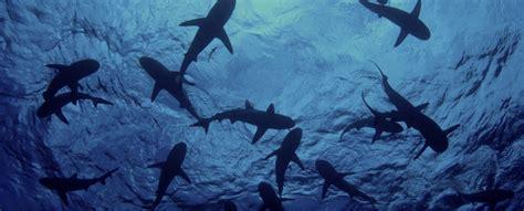 sharks wildaid