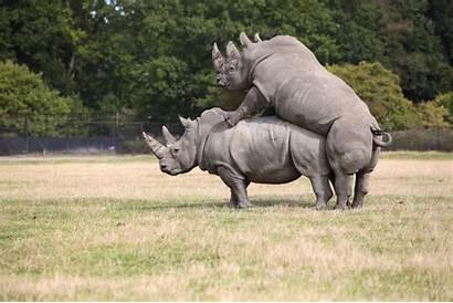 Animals Rainforest Endangered Extinct Species Rhinoceros Tropical
