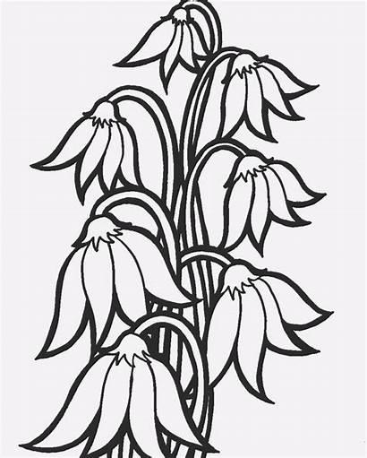 Flores Cu Dibujo Cai Pintar Imprimir Desene