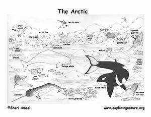 Free Biome Coloring Pages - AZ Coloring Pages