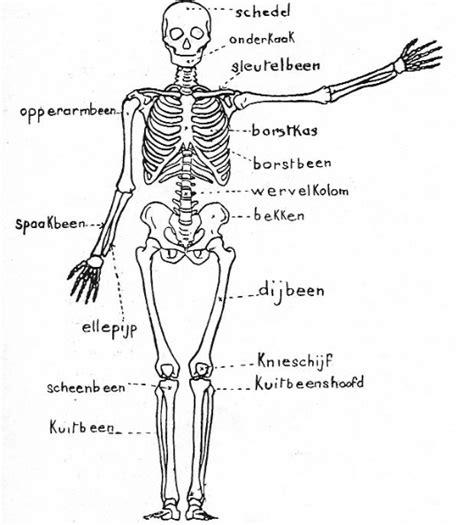 Kleurplaat Skelet Mens by Skelet Biologie Hoofdstuk Voortplanting Sketches