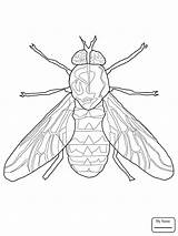Fly Firefly Fruit Insect Drawing Insects Coloring Getdrawings Pages sketch template