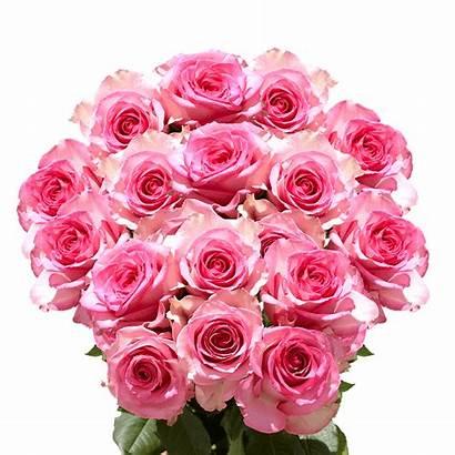 Pink Roses Valentine Flowers Fresh Valentines Globalrose