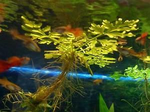 Schöne Bilder Kaufen : aquarium barsche kleinanzeigen kaufen verkaufen bei deinetierwelt ~ Orissabook.com Haus und Dekorationen