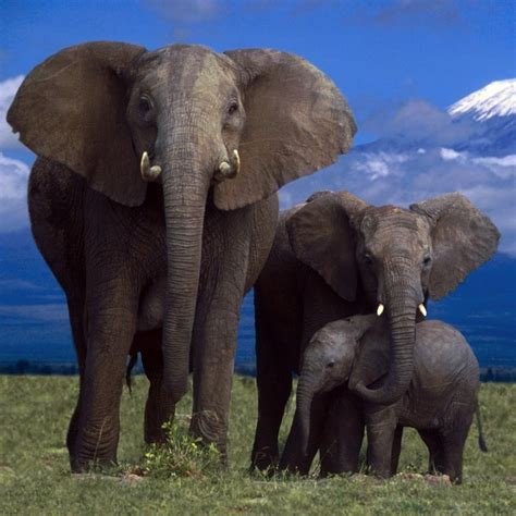 elephant family belafrique  personal travel planner