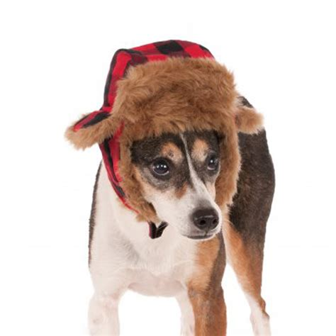 Trapper Dog Hat Costume With Same Day Shipping Baxterboo