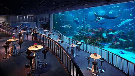sea aquarium mice singapore