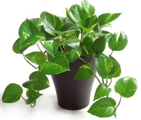 jenis tanaman hias percantik rumah