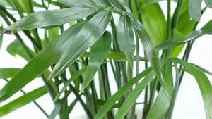 Zimmerpflanzen Pflege Tipps : zimmerpflanzen beliebte arten passender standort und ~ Lizthompson.info Haus und Dekorationen