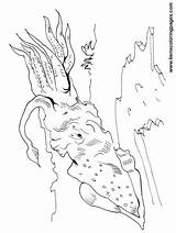 Squid Coloring Pages Printable Colouring Giant Sea Shark Cute Minecraft Whale Ocean Vs Sperm Getcolorings Template sketch template