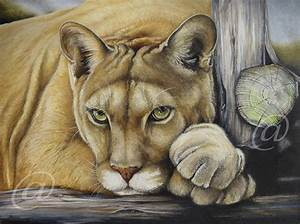 original oil painting cougar mountain lion puma cat