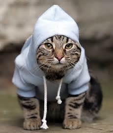 bad cats bad cats lol