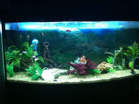Decorating Ideas For Fish Tank by 3 Ways To Creatively Decorate A Freshwater Fish Tank Wikihow
