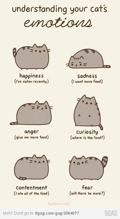 cat psychology cat psychology related keywords cat psychology