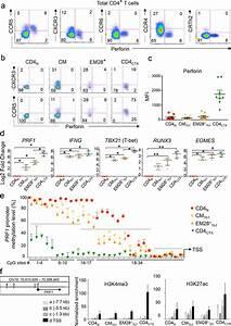 The transcription factors Runx3 and ThPOK cross-regulate ...