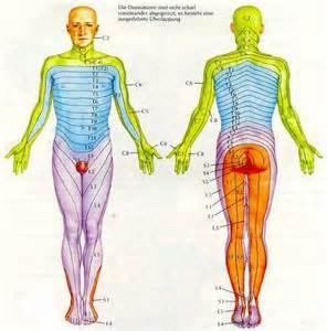 Dermatome Pattern Chart