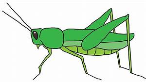 How to Draw a Grasshopper: 5 Steps (with Pictures) - wikiHow