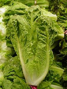 Romaine Lettuce - Nutrition Facts, Health Benefits ...