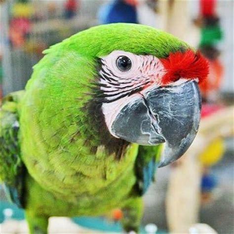 arizona bird store azbirdstore twitter