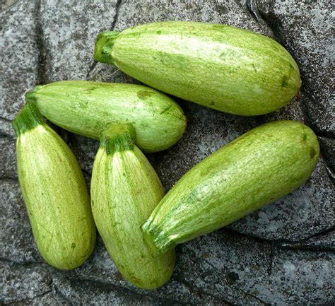 squash vegetable zucchini the seasonal gourmet