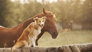 Hunde Größe Berechnen : tierhalterhaftpflicht g nstige hundehaftpflicht uvm axa ~ Themetempest.com Abrechnung