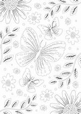 Colouring Clipper Coloring Sheet Butterfly Teas sketch template