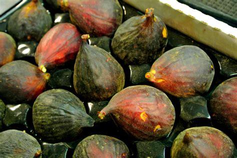 when are figs in season when does fresh figs season begin eat like no one else