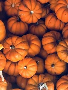 aesthetic fall background fall pumpkin fall