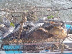 marine debris location removal project