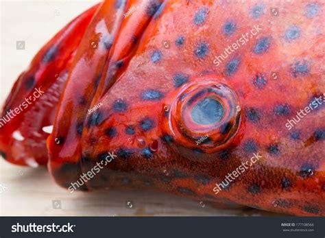 grouper banded blacktip shutterstock