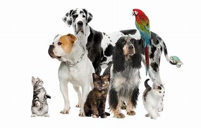 Pet Pets Feed Hire Animals Care Bookkeeping