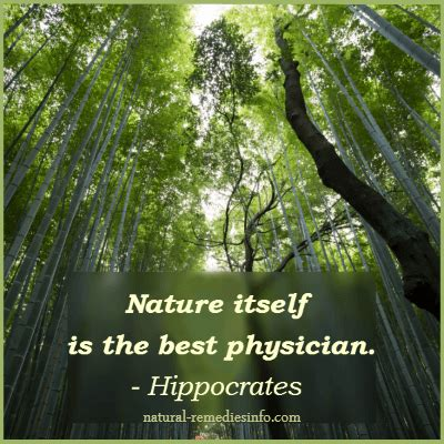 medicinal herbs quotes image quotes  relatablycom