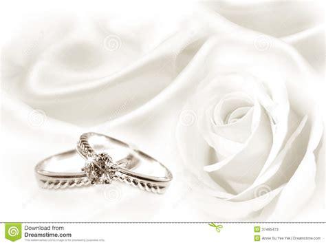 wedding rings  white rose stock  image