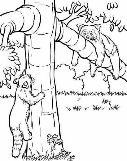 Coloring Panda Tree Chibi Coloring4free Realistic Companies